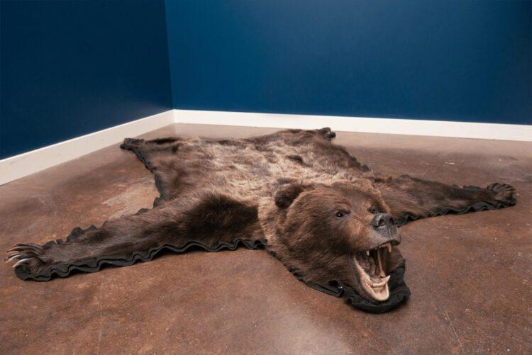 Grizzly Bear Skin Rug
