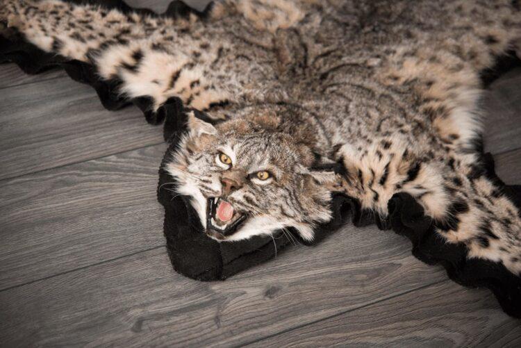 Bobcat Skin Rug