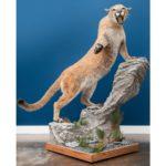 Cougar Wildlife Mount - Pedestal