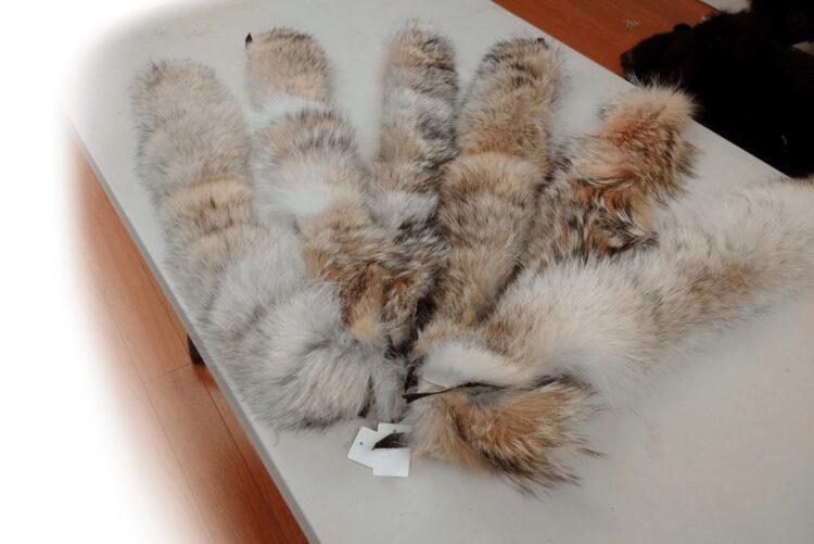Coyote Fur Collars