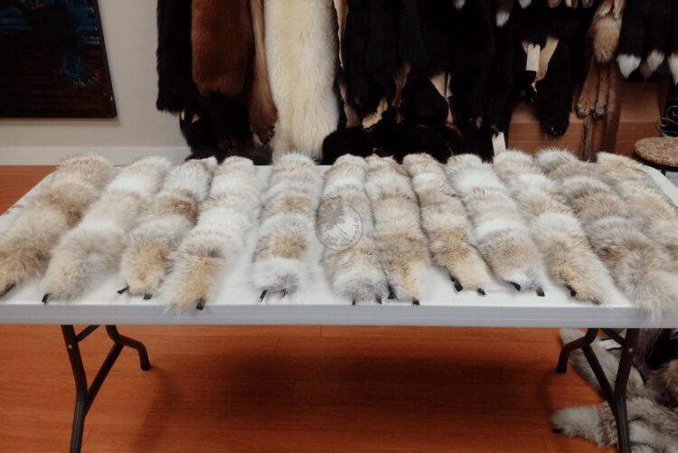 Coyote Fur Collars - Premium