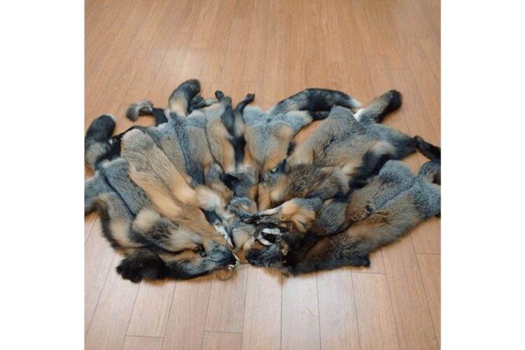 Cross Fox Hides