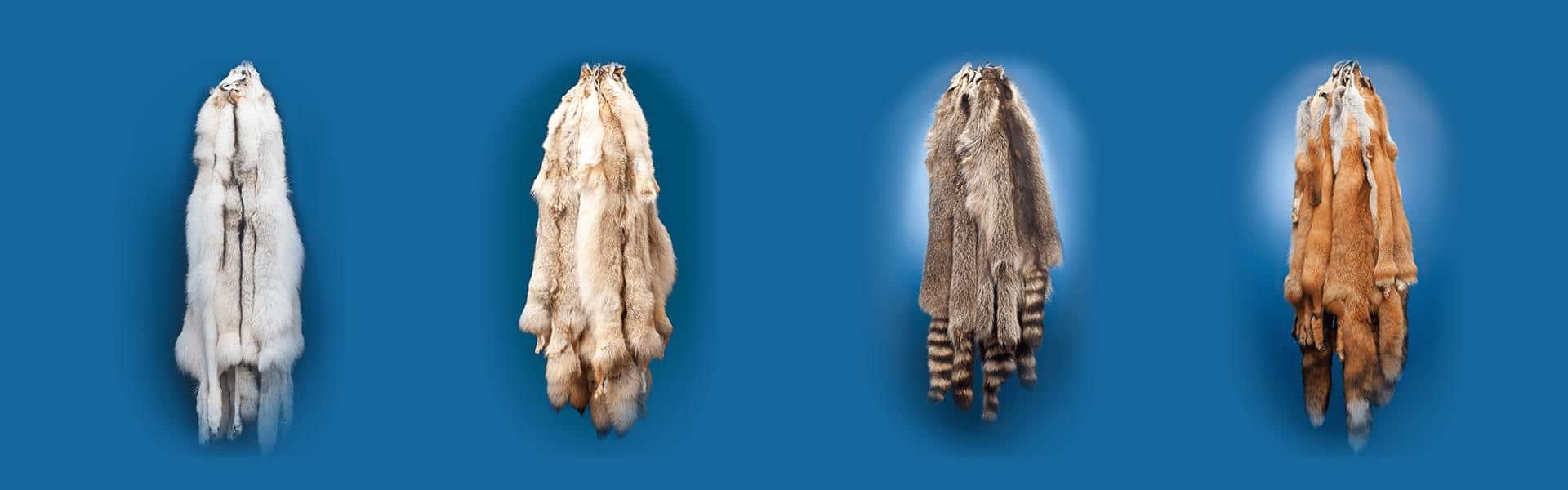 Fur Hides Slide Show Image