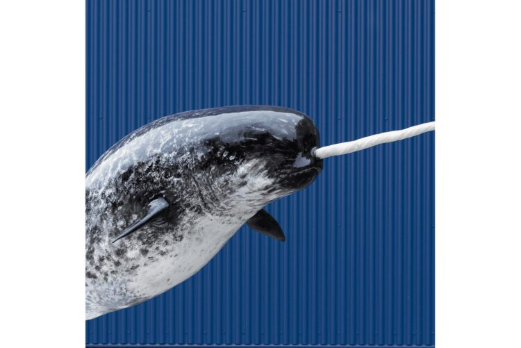 Narwhal Wildlife Mount - Artificial