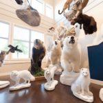 Polar Bear Wildlife Mounts