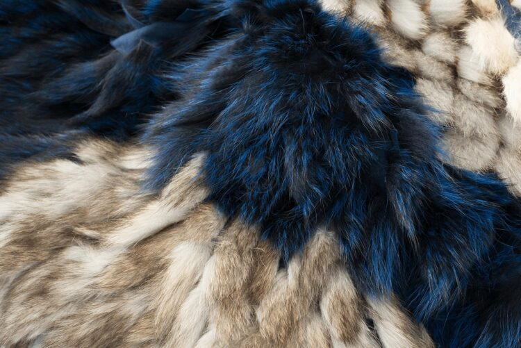 American Raccoon Blanket - Dancer B
