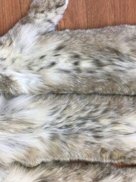 Canada Lynx Hides