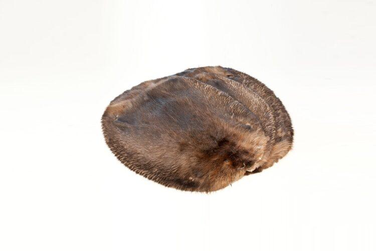 Beaver Hide